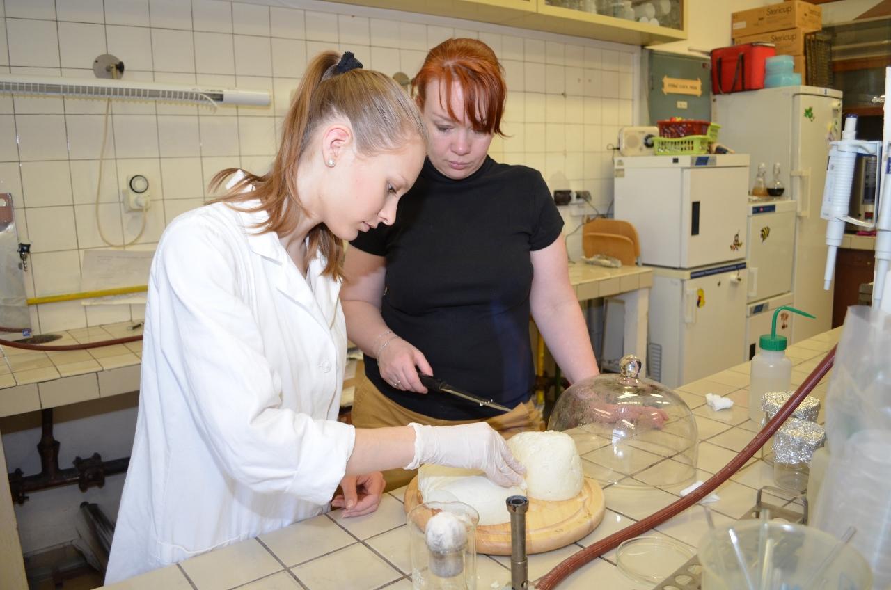Slovenskej bryndzi pomáha veda – aby bola bezpečnejšia